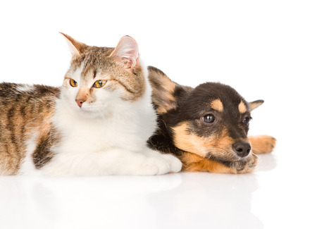 small puppy dog and kitten lying together  isolated on white background photo