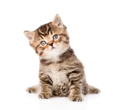 baby british tabby kitten sitting in front  isolated on white background Stock Photo - 27675072