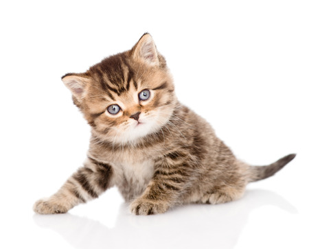 baby british tabby kitten looking at camera  isolated on white background Stock Photo - 27675075