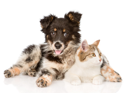 cats playing: mixed breed dog and cat looking away  isolated on white background