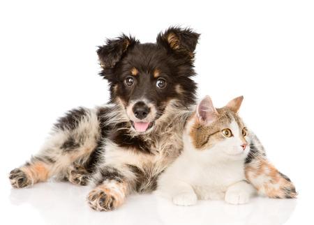 gato jugando: perro de raza mixta y un gato mirando lejos aislado en el fondo blanco