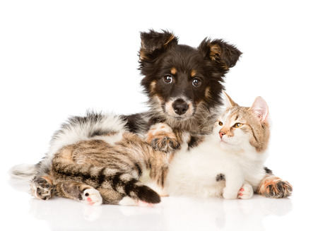 animals together: Cute dog embracing cat  isolated on white background