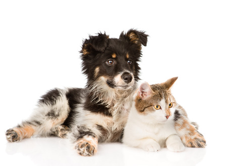 mixed breed dog and cat looking away  isolated on white background photo