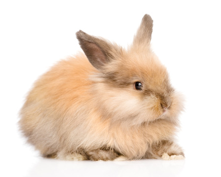 jhy: Cute rabbit in profile  isolated on white background