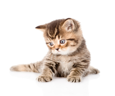 baby british tabby kitten looking away  isolated on white background Stock Photo - 28096434