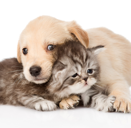 closeup baby puppy dog and little kitten together  isolated on white background Stock Photo