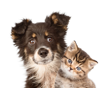 closeup puppy dog and kitten together  isolated on white background photo