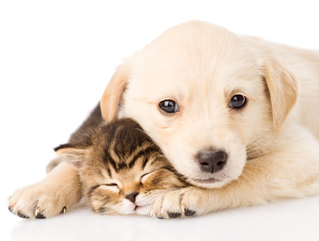 kindje puppy hond en kleine kitten samen op een witte achtergrond Stockfoto