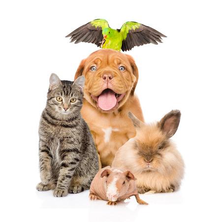 papagayo: Grupo de animales domésticos junto en frente Foto de archivo