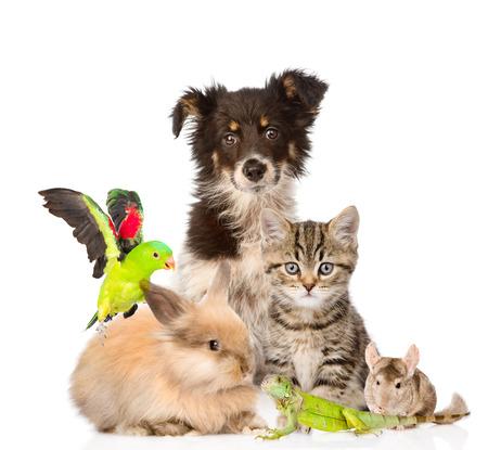 eidechse: gro�e Gruppe von Tieren isoliert auf wei�em Hintergrund Lizenzfreie Bilder
