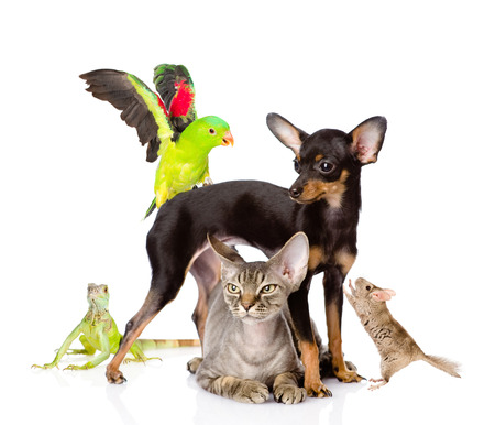 chordata: group of exotic pets  isolated on white background