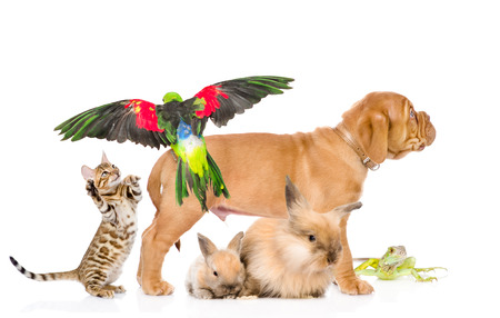 group of exotic pets  isolated on white background photo