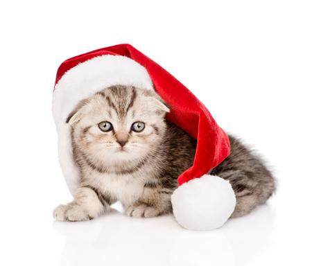 scottish kitten with santa hat  isolated on white background photo