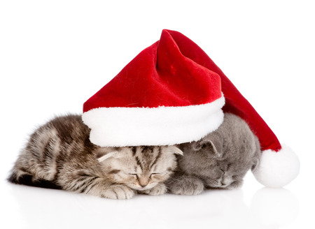 two sleeping kittens with santa hat  isolated on white background photo
