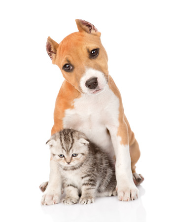 kitten and puppy sitting together  isolated on white background photo