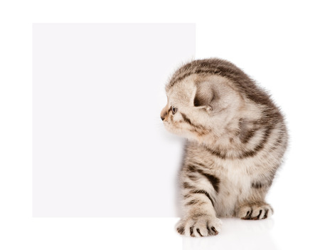 tabby kitten peeking out of a blank sign  isolated on white background photo