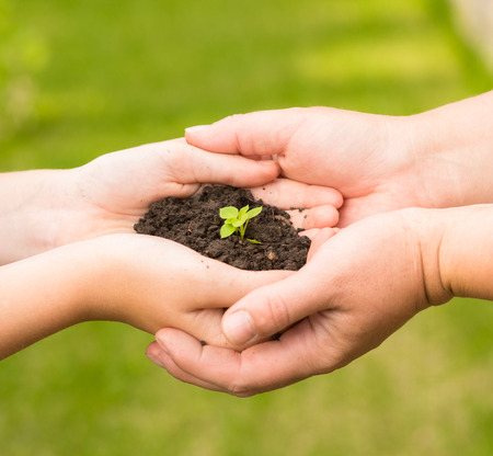 adult and baby holding young plant in hands Stock Photo