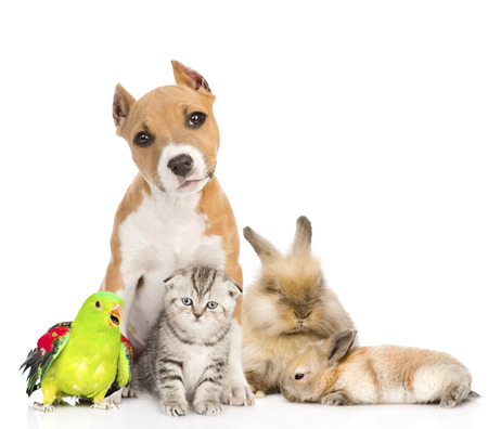 Group of pets together in front  Isolated on white background Stock Photo