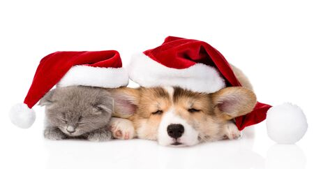 sleeping Pembroke Welsh Corgi puppy and kitten with red santa hat  isolated on white background photo