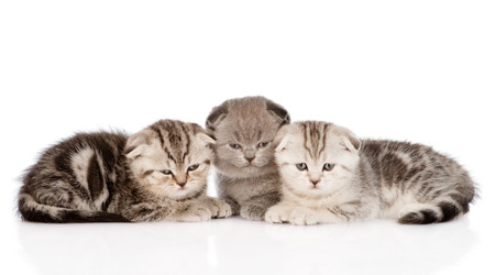 three baby kittens in front  isolated on white background photo