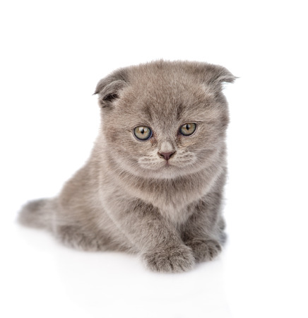 fluff: little kitten sitting in front  isolated on white background Stock Photo