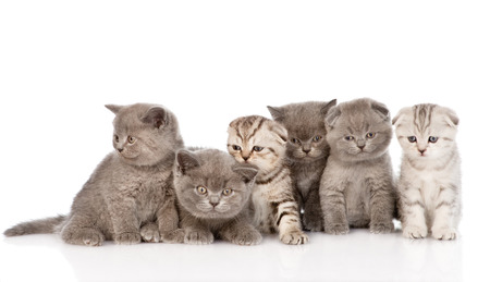large group kittens in front  isolated on white background photo