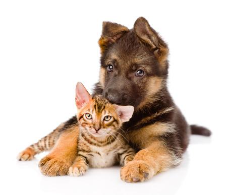 alsatian shepherd: cute puppy embracing little kitten  isolated on white background Stock Photo