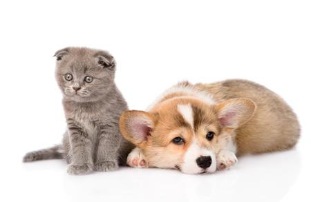 animal sad face: sad cat and dog together  isolated on white background