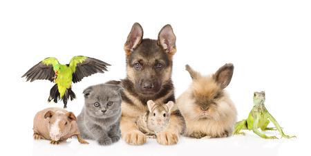 young rabbit: groupe d'animaux divers isolé sur fond blanc