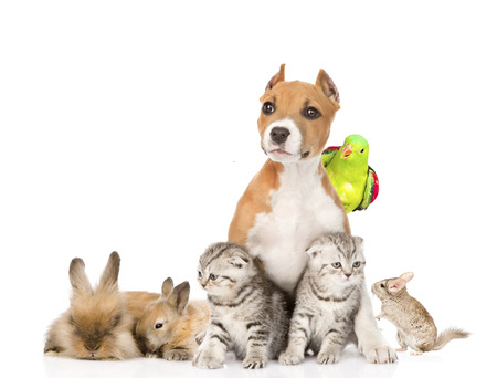 large group of pets together in front  Isolated on white background photo