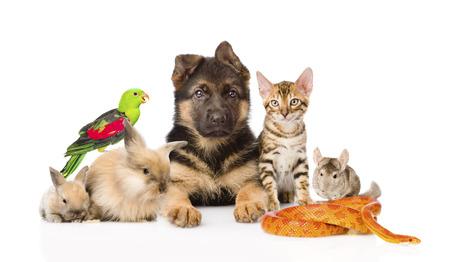애완 동물의 큰 그룹이 함께 흰색 배경에 고립