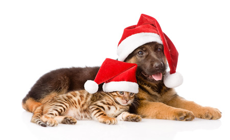 pet  animal: cat and dog with red hat. focus on cat. isolated on white background