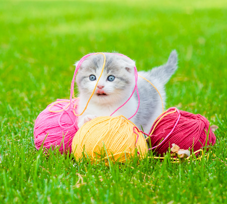 Cute kitten playing with clews of thread on green grass photo