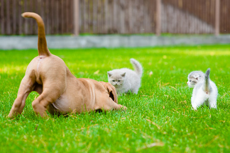frolic: Dog and two kittens playing together outdoor Stock Photo