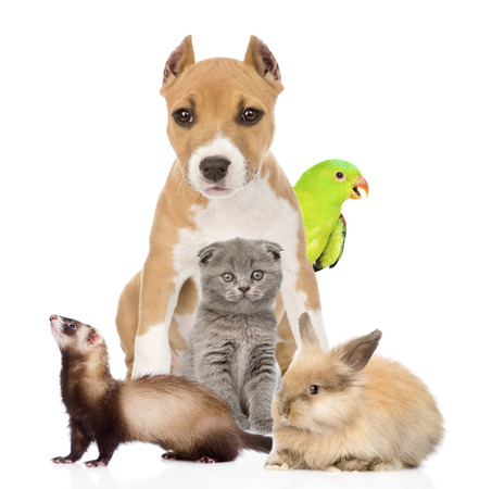 Group of pets together in front. Isolated on white background photo