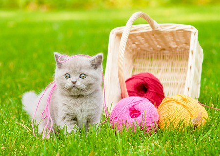 kitten playing with clews of thread on green grass photo