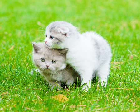 two sad kittens on green grass photo