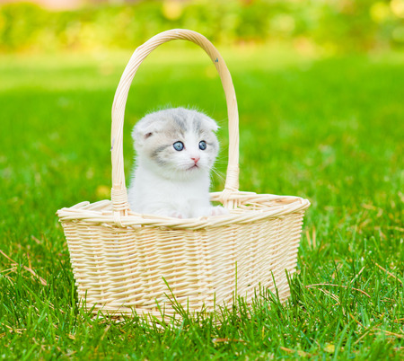 kitten in basket on green grass photo