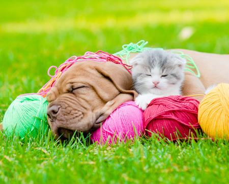 緑の芝生で一緒に寝ているボルドー子犬犬と新生児子猫