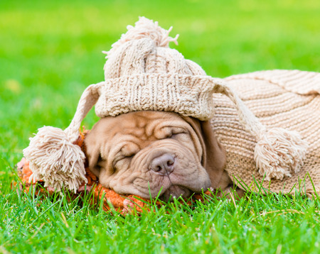 closeup puppy: puppy with funny hat sleeping on the grass