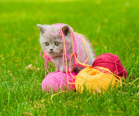 ball of wool: Cute kitten playing with clews of thread on green grass Stock Photo
