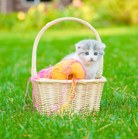 kitten with clews of thread  in basket on green grass photo