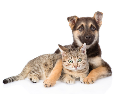 dog and cat: mixed breed dog embracing tabby cat. isolated on white background