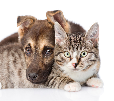 closeup cat and dog together. isolated on white background