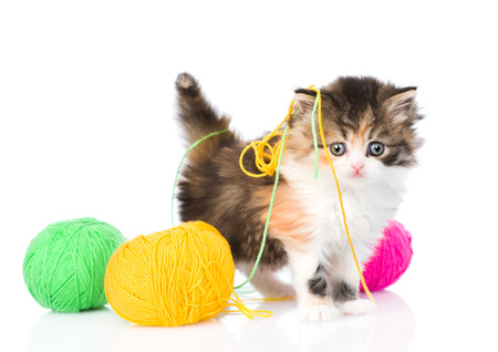 calico cat: Cute kitten playing with clews of thread. isolated on white background Stock Photo