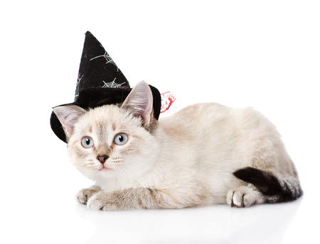 kitten with witch hat for halloween. isolated on white background photo
