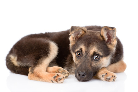 sad mixed breed puppy dog looking at camera. isolated on white background photo
