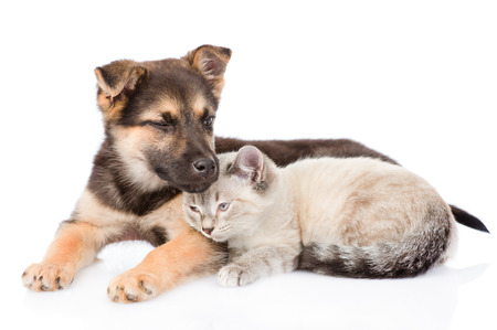 mixed breed dog embracing small cat. isolated on white background photo
