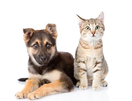 猫と犬の前に座って。白い背景で隔離