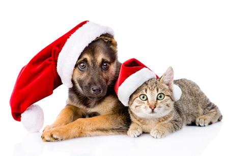 Gato e c�o com chap�u de Papai Noel. isolado no fundo branco